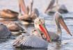 viajes ornitologicos